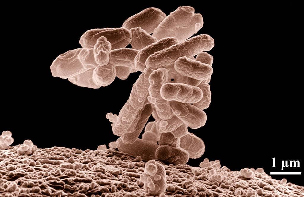 Бактерии спутники человека