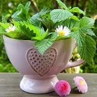 Лекарственные растения, фото, описание