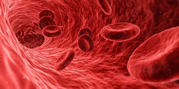 Гемоглобин в организме