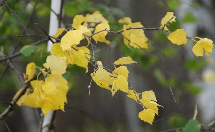Осенние приметы погоды