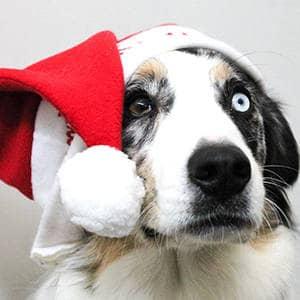 совместимость собаки и собаки