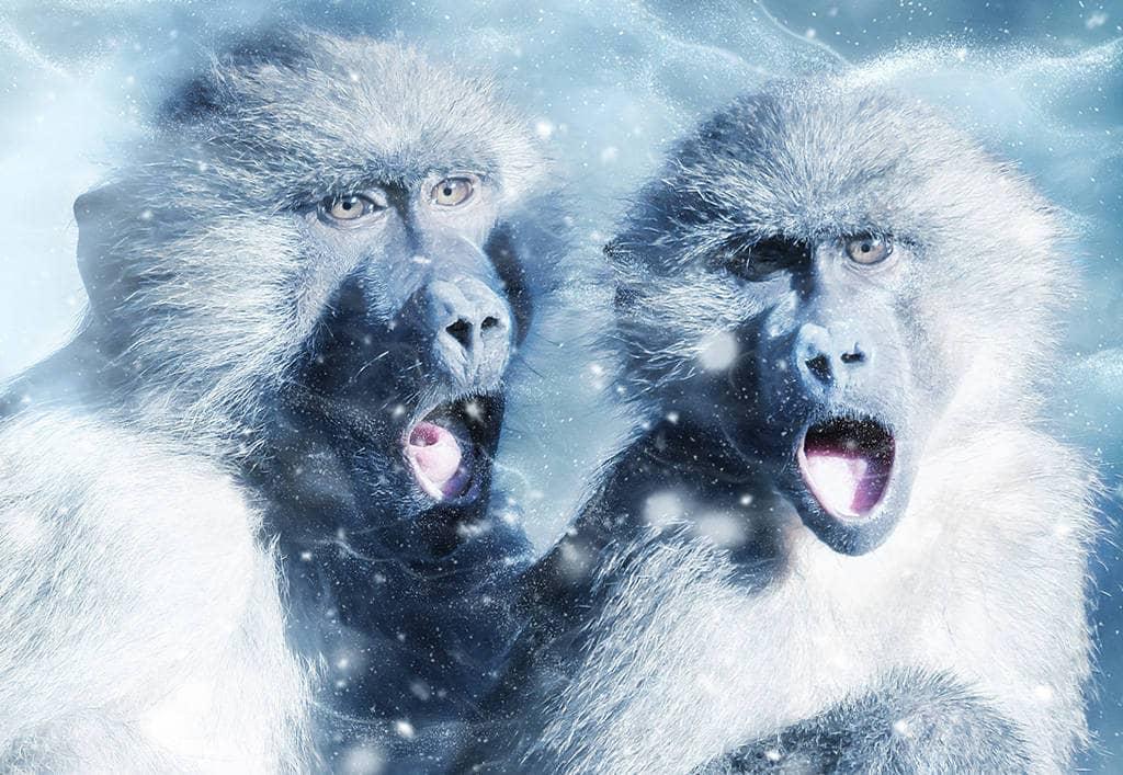 Гороскоп совместимости обезьяны