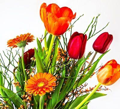 Геберы тюльпаны
