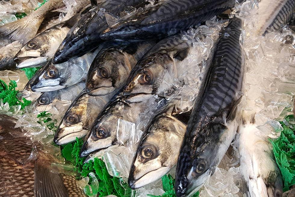 Рыба скумбрия
