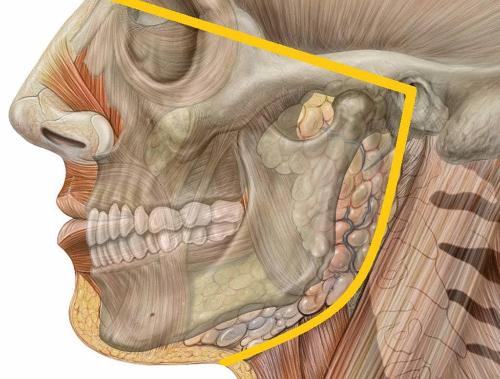 Дисфункция височно нижнего челюстного сустава