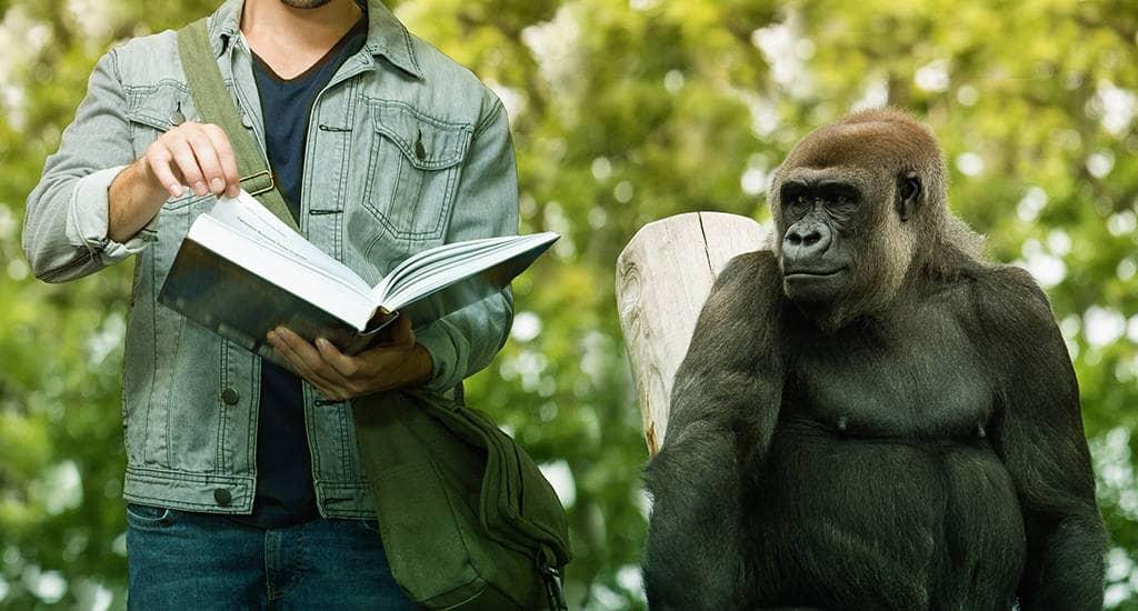 Инстинкт человека обезьяны